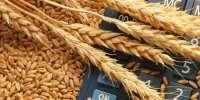 Зерновые закрома Долуды